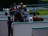 Zerbino0906